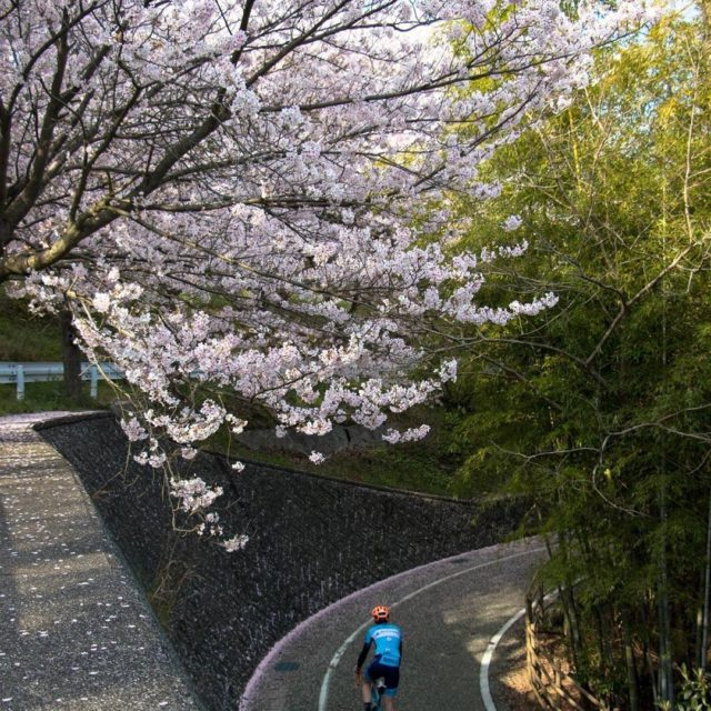 The cherry blossoms are out for this MWCC Global editionhellip